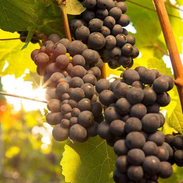 Winemaker's Year | Wines of British Columbia